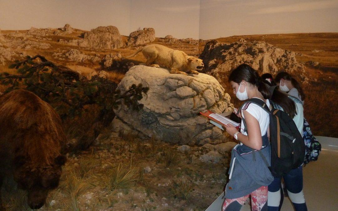 Les 6e visitent la grotte Chauvet-Pont d'Arc